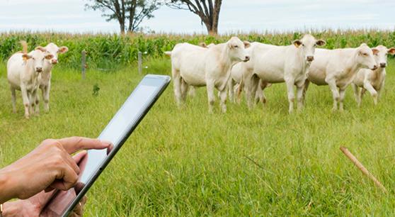 Startups têm revolucionado o mercado de agronegócio no Brasil