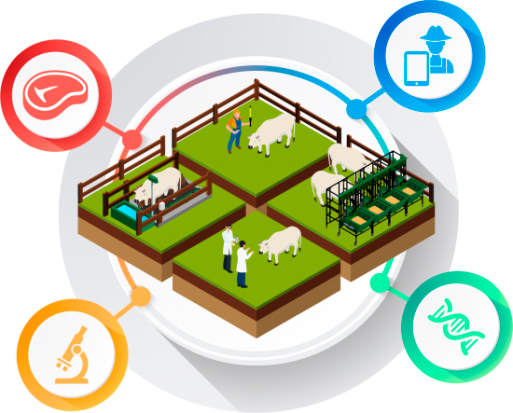 soluções para gado de corte, eficiência alimentar e pesquisa