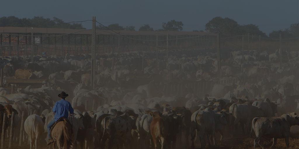 Rebanho bovino