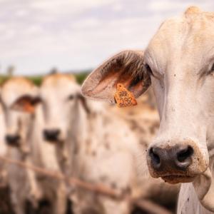 Os rumos das exportações de carnes frente ao COVID-19
