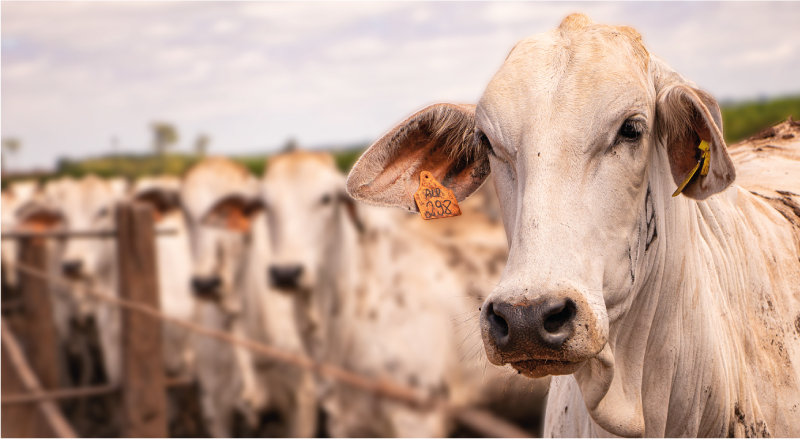 exportações de carnes frente ao COVID-19