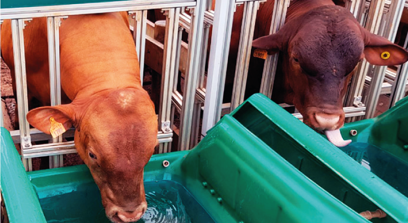 Animal bebendo água em um bebedouro Intergado