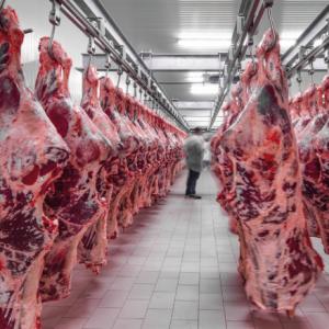 A classificação de carcaças como ferramenta para aumentar seu lucro na fazenda e no frigorífico