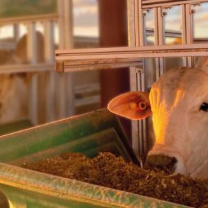 Pecuária 4.0: A eficiência alimentar
