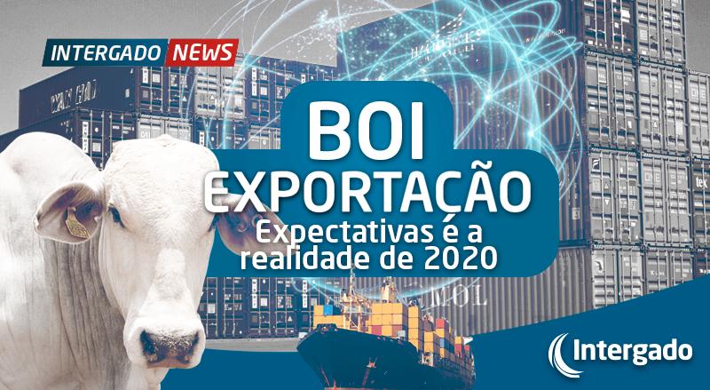 Boi Exportação – Expectativas X Realidade em 2020