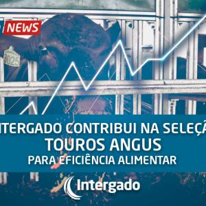 Intergado contribui na seleção de touros Angus para eficiência alimentar