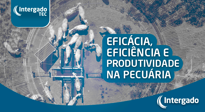 Eficácia, eficiência e produtividade na pecuária