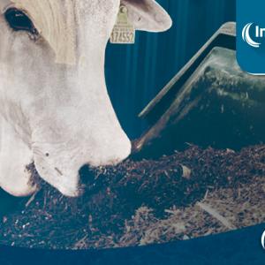 CAR – Consumo Alimentar Residual como ferramenta para provas de eficiência alimentar.